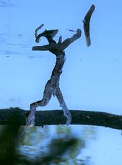 una strana creatura :-) lancia un boomerang (M a r i S à) Tags: strange odd illusion pareidolia branches water reflection