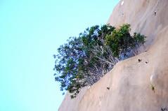 cement landscapes-paisajes de cemento-DSC_2456-W (taocgs) Tags: flora paisaje landscape naturaleza nature planta plant minimalismo minimalism