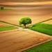 CrossingTree (Little♥Krawler) Tags: nature natur landschaft landscape hessen germany deutschland field tree baum feld sun sonne münzenberg