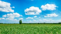 Dutch landscape (robvanderwaal) Tags: groen landscape wolk boom nederland hdr blauw nedtherlands rvdwaal clouds lucht trees blue 2017 bomen landschap dutch cloud outdoor reed sky green robvanderwaalphotographycom tree wolken riet