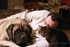 Best Friends (Riverstone Images) Tags: portrait man dog englishmastiff mastiff giantbreed fawn blackmask male cat kitty dsh tiger pets home indoors cuddling loyal candid catmoments