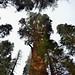 Distortion (Sequoia National Park)