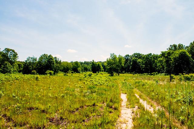 Koontz Lake Nature Preserve - July 18, 2017