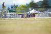 _MG_9933 (Corey Polis) Tags: akc coursing dogsports fastcat july302017 mushu nwrrc sequim