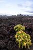 IMG_9597.jpg (Pancholp) Tags: floreana galapagos lavarocks