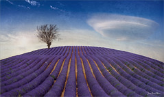 Line (Jean-Michel Priaux) Tags: paysage landscape nature line lines tree lonely lonesome violet lavender field photoshop cloud lenticular spectacular painting paintingmatte paintmapping surreal unreal unautremonde grafic graphic terrific fear scare ufo ovni