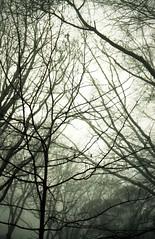 img334 (Robyn Sewell) Tags: film nikon nikonfe tree leura colour ektar100 fog