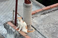 Cat on roof (elka.) Tags: cat kot katze neko roof chat cats nature animal katte katt gata gatta kotka kat γάτα кошка кошки котка