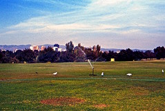 Adelaide. (pszz) Tags: grass sprinkler gull skyline 1980