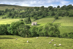 Sheep grazing in Wharfedale, Yorkshire Dales (Baz Richardson (now away until 6 August)) Tags: northyorkshire yorkshiredales wharfedale fells sheepgrazing pasture farmland