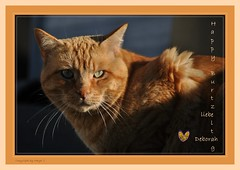 * Häppy Burzeltag * Feliz Cumple * Happy Birthday *    .  DSC_2940-001 (maya.walti HK) Tags: 2013 250717 animales animals birthday birthdaycard birthdaycards cats congratulations copyrightbymayawaltihk cumpleaño felicidades flickr garfield gatos geburtstag geburtstagdeborah2017 geburtstagskarte geburtstagskarten glückwünsche glückwunschkarte glückwunschkarten gratulationen katzen nikond3000 tiere