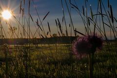 Embrace the heat source (Ludwig Ohlson) Tags: finland scandinavia sunrise samyang 50mm xe2 fujifilm nordic summer midnightsun nature sun motljus