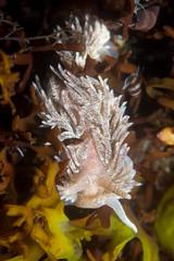Nudi 1 (Shure Media) Tags: rockport massachusetts old garden beach hermit crab green barnacle nudibranch rock