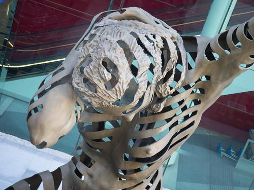 Sculptural Hexacoralliastic