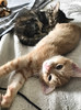 """There are two means of refuge from the misery of life — music and cats."" ―Albert Schweitzer 🐈 🐈 (anokarina) Tags: appleiphone7 highlands louisville kentucky ky kitty kitties cats animals pets kittens"