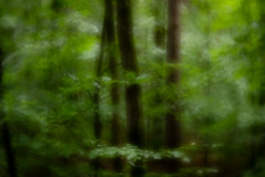 impression in green (bloeemb) Tags: woods forest green trees leafs impressionismus