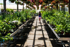 At the Nursery (Jenn- Sycamore Lane Photography) Tags: girl plants greenhouse nursery local documentary flowers