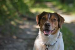 Timmy #1 (Anna M. Sky) Tags: dog animals dogs wood bokeh animalphotography pets