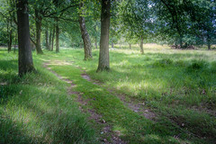 Follow the path (RobMenting) Tags: 70d eos landscape noordbrabant nature zomer canon europe netherlands canoneos70d boxtel nederland nl