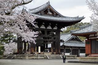 Building and Cherry Blossoms, Tōdai-ji Temple, Nara