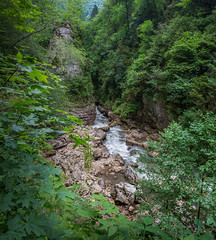 The forest and The river (Maxim Shelkov) Tags: nature river water travel trip landscape russia tree trees panorama nikon d3100 green rock rocks ravine outdoor mountain mountains mountainside morning summer day weekend me tour tourism beautiful walking rainy relax forest photo photography