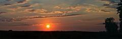 This morning's sunrise greeting. (Steve InMichigan) Tags: vivitar75205mmf38lens sunrise panoramic field landscape skyline fotodioxlensadapter canoneosrebelt5i