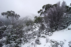 Snowstorm in the Labyrinth (Gregor  Samsa) Tags: australia tasmania australian tasmanian track overlandtrack overland wandering wander hike hiking walk walking trek trekking tracking path footpath trail journey adventure outdoor outdoors snow snowy view vista overlook viewpoint labyrinth storm snowstorm