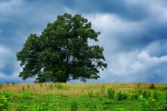 Old Federal Tree (David W Johnson) Tags: ballground tree landscape storm lonetree oak clouds