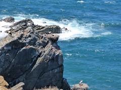 P1020588 (snapshots_of_sacha) Tags: sea atlantic atlantik meer beach algarve portugal landscape nature wild