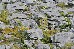 Wildflowers and Limestone. (mcgrath.dominic) Tags: limestone glints grikes wildflowers theburren coclare