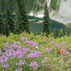 Flowers and Lake Ann (jamesdelbertanderson) Tags: northcascades cascades penstemon paintbrush castilleja pnw washington nature wildflowers okanoganwenatcheenationalforest maplepassloop