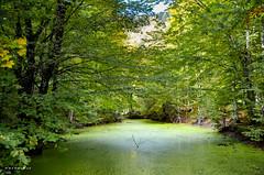 1000 shades of green (whyweaway) Tags: bolu nature green tree lake yedigöller alga moss nikon hiking walk colour