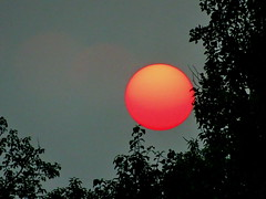 Tonight's red, setting sun over Bluebird Estates (+1) (peggyhr) Tags: peggyhr sunset red sun haze smokefrombcwildfires dsc03627a alberta canada silhouettes foliage prairies carolinasfarmfriends infinitexposurel1 thelooklevel1red super~sixbronze☆stage1☆ thegalaxy thelooklevel2yellow thegalaxystars thelooklevel3orange super~six☆stage2☆silver thegalaxyhalloffame super~six☆stage3☆gold thelooklevel4purple thelooklevel5green thelooklevel6blue super~six☆stage4☆art