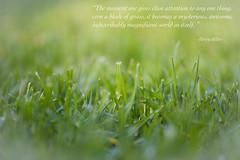 A blade of grass..... (Karon Elliott Edleson) Tags: quote summer macro vingnette depthoffield