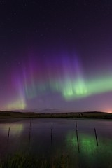 A night in July (Tracey Rennie) Tags: northernlights alberta fence cochrane pond slough reflections haybales grasses auroraborealis