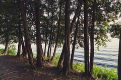 Hoodoo Point Campground on Lake Vermilion (Tony Webster) Tags: hoodoopoint lakevermilion minnesota tower towerpark lake lakefront shore trees unitedstates us