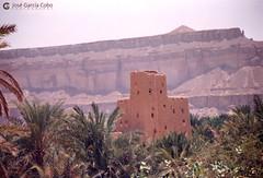 199909 Yemen Hadramaut (95) (Nikobo3) Tags: asia orientemedio arábiga arabia penínsulaarábiga yemen hadramaut desierto desiertoramlatassabatayn culturas travel viajes fujicolorsuperia100iso película nikobo joségarcíacobo urban street nikon nikonf70 f70 sigma70300456