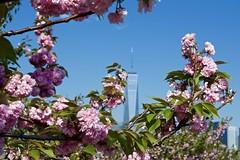 One World Trade Center (djidjah) Tags: oneworldtradecenter freedomtower libertystatepark jerseycity newjersey
