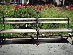 The loneliest bench (Joey Sasson) Tags: bench park flowers grass brooklyn ny shadow