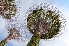 Künstliche Bäume Supertree Grove in Singapur