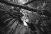 Fallen Timber (Indigoplum) Tags: england hertfordshire rickmansworth uk town aquadrome tree water