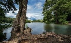 See (blancobello) Tags: waldsee weitwinkel landscape sony see lake woods tree baum