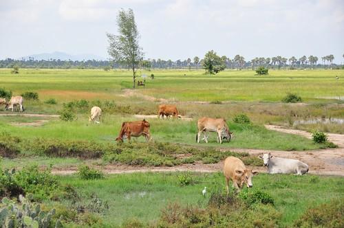 parc national sam roi yot - thailande 78