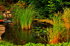 man-made pond. (alex.vangroningen) Tags: water plants goldfish reflection green red blue pond handheld colors tiles outdoord