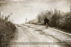 Ride to work (ILO DESIGNS) Tags: 105mm artística bicicleta cabezas camino d3300 españa monocroma retro sevilla social people man bicycle bike road path field rural seville europe spain monochrome artistic pictorial grey riding
