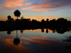 Sunset July 27th 2017 (Jim Mullhaupt) Tags: sunset sundown dusk sun evening endofday sky clouds color red gold orange pink yellow blue tree palm outdoor silhouette weather tropical exotic wallpaper landscape nikon coolpix p900 pond lake water reflection manateecounty bradenton florida jimmullhaupt cloudsstormssunsetssunrises photo flickr geographic picture pictures camera snapshot photography nikoncoolpixp900 nikonp900 coolpixp900