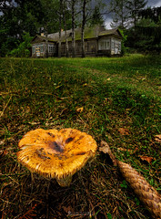 The House deep in the Woods (oliver.herbold) Tags: woods forest wald abandoned verlassen house haus jodłówka poland polen belarus weisrussland mushroom funghi pilz wideangle canon oliverherbold
