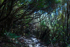 Magical forest (Rico the noob) Tags: dof trees published 2017 landscape tree travel nature d500 levada sky outdoor madeira forest 1120mm 1120mmf28