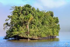 Au mileu du Maroni (alain_did) Tags: pirogue arbres lemaroni edithcavell reflets saintlaurentdumaroni guyane amazonie amériquedusud