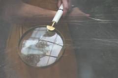Kept Secrets, In The Woods (Angie Lambert) Tags: secrets weliveinthewoods storytelling bookjacket coulditbe greenhouse vintage vintagedress romance feminine magnify magnifyingglass